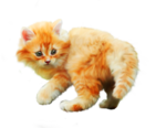 «Рыжий котенок» 0_8c6bb_ee6646cc_S