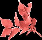 «Four Roses»  0_8cdf9_e8d8e97e_S