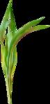 «Brigit_Flowery_Meadow» 0_8d4a1_a71b7378_S