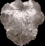 cvd inner storm begonia leaf 2.png