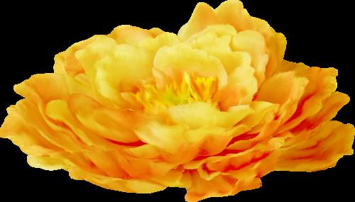 «Delph_PureSpirit»  0_8fa17_e98abdc6_L