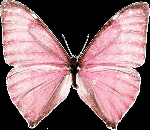 «Greedy-Pink» 0_8fcc9_d8d0c99c_L