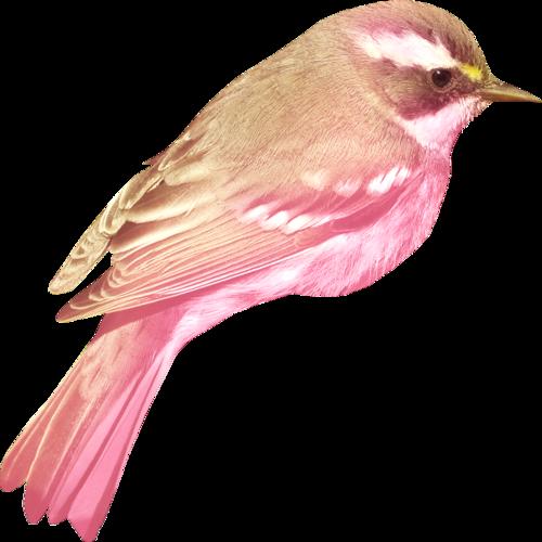 «Greedy-Pink» 0_8fce5_e56223e0_L