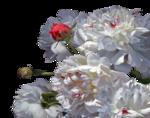 Annytubes_floral_218_10_08_2012.png