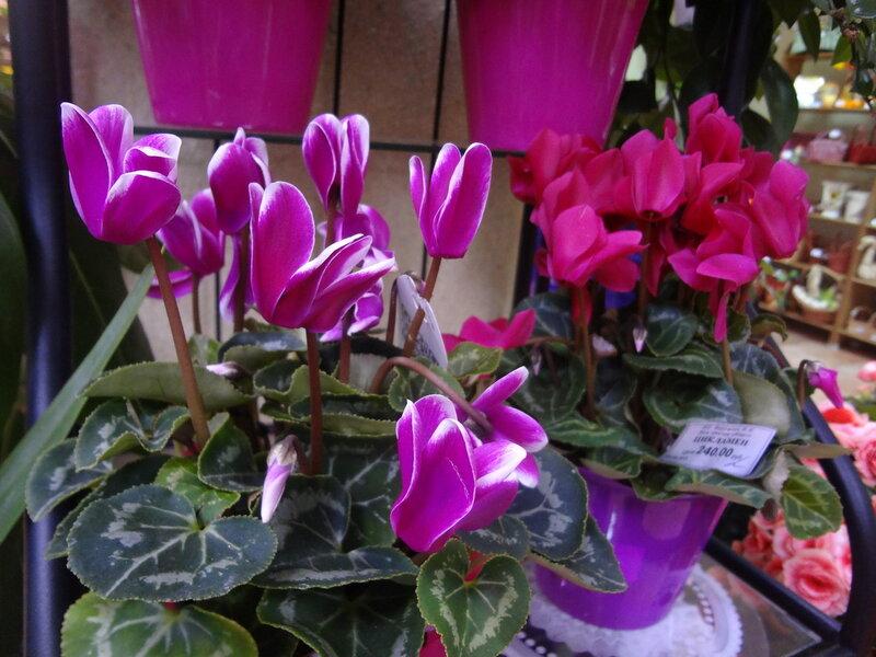 Цветы в горшках в подарок женщине 86