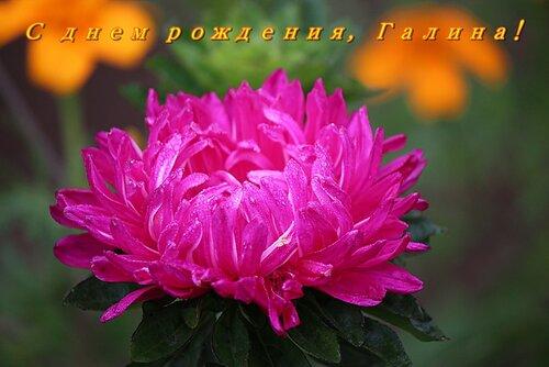 ... за 3 сентября 2012 на Яндекс.Фотках: fotki.yandex.ru/users/lyubovbaklanova/date/2012-09-03