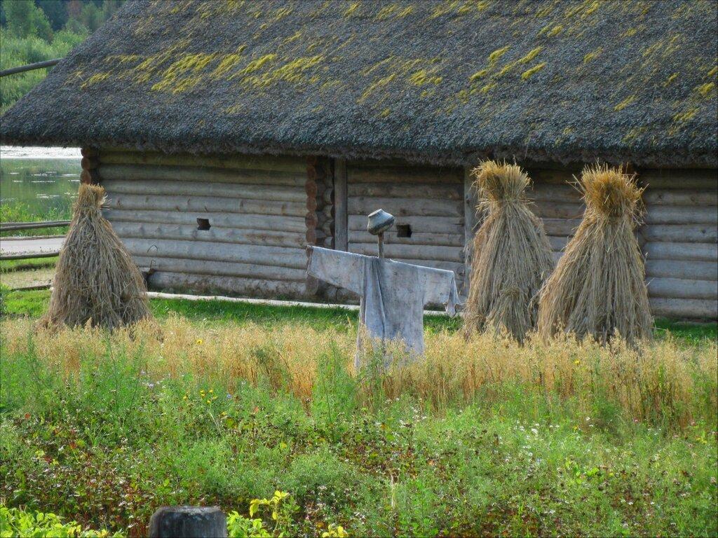 Пушкинские горы, Бугрово. Огород