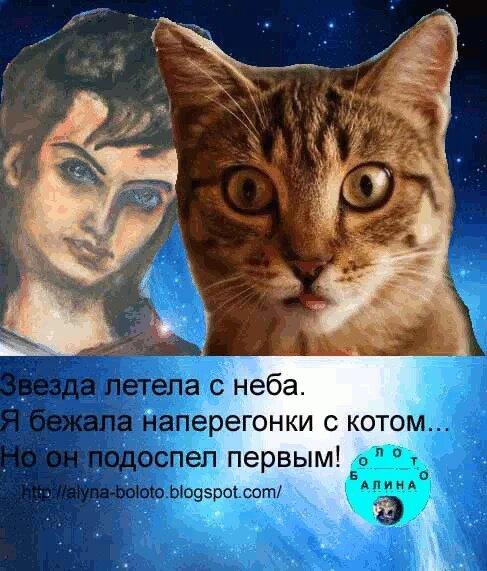 Звезда и кот
