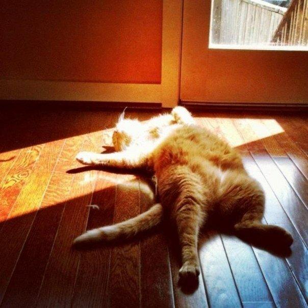 Последние летние солнечные деньки нужно провести так...