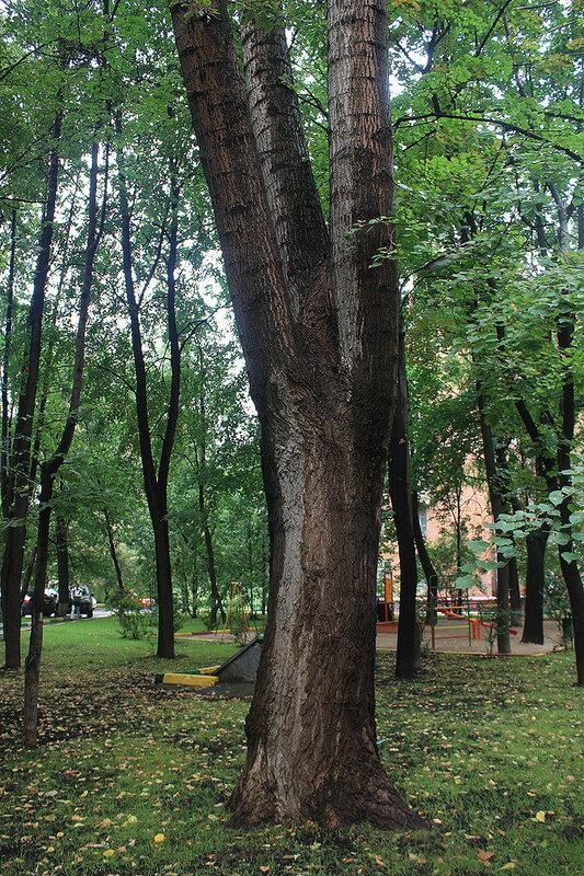 Москва, Лефортово, 15 августа 2012