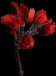 feli_btd_red flowers branch.png