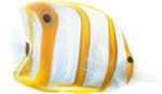 NLD Fish 3.png