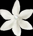 NLD Flower 2.png