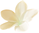 NLD Freebie Flower.png