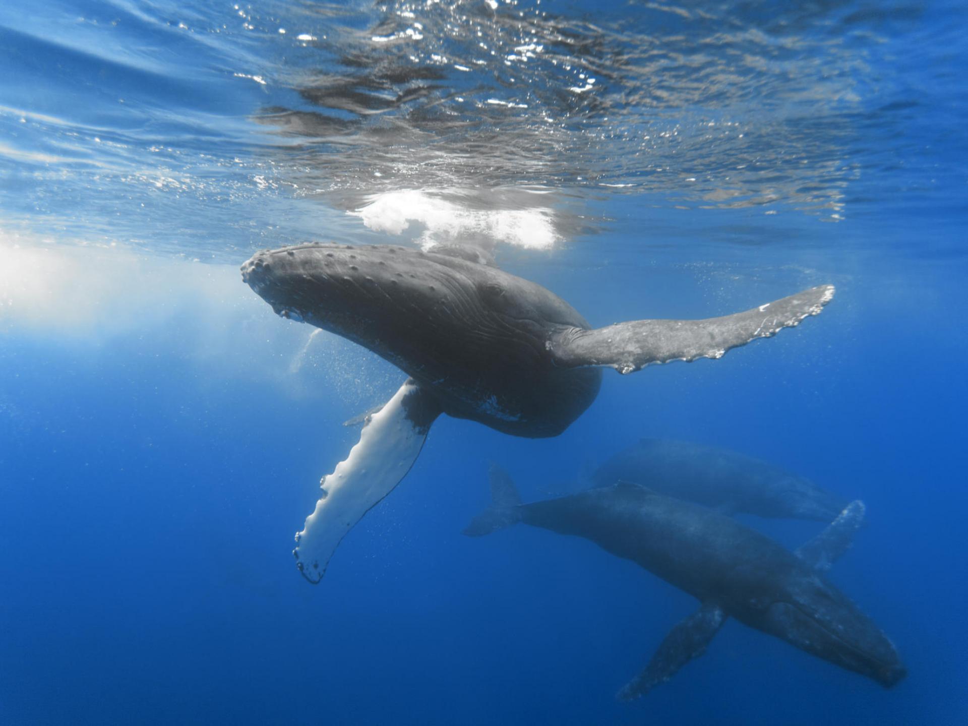 Фото пенисов у китов 5 фотография