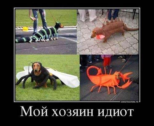 Прикольные картинки: комбинезоны для собак