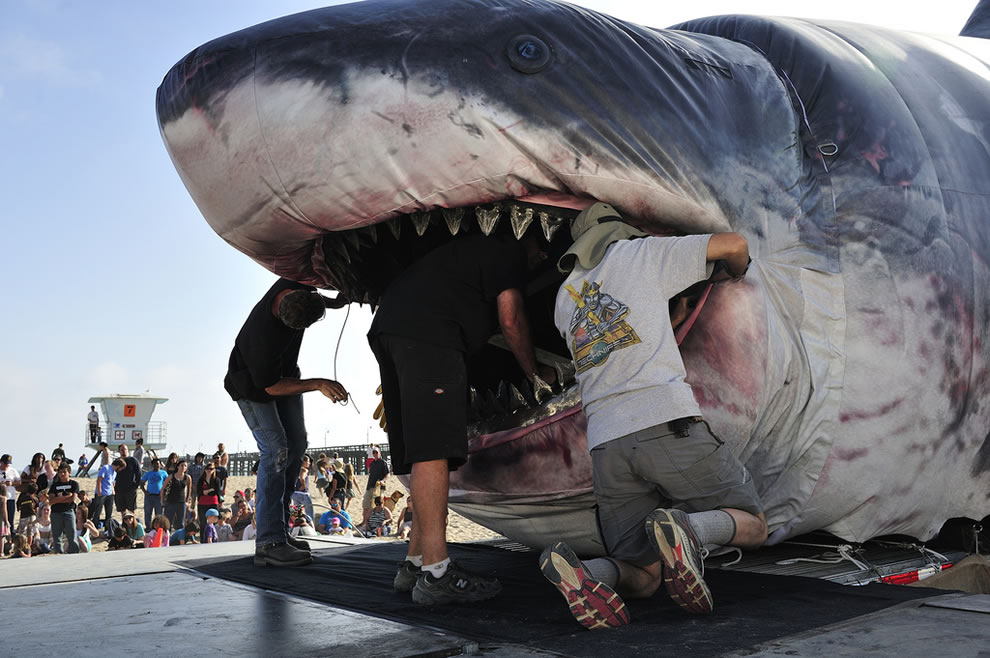 Biggest animal in the world alive