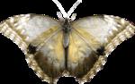«Bee_Silence»  0_8c985_8da257de_S