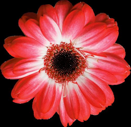 «Valentinas Creations_Patriotic Birthday»  0_8f82d_9ec68064_L