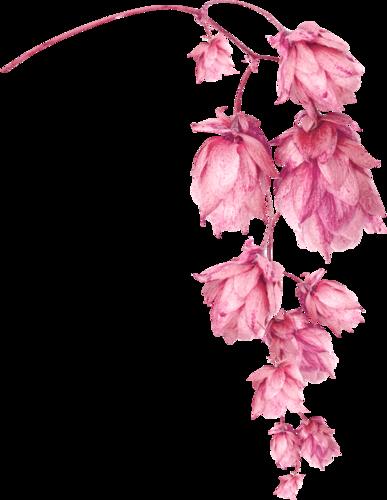 «Greedy-Pink» 0_8fcf8_fc2e7053_L