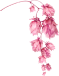 Lilas_Greedy-Pink_elmt (88).png
