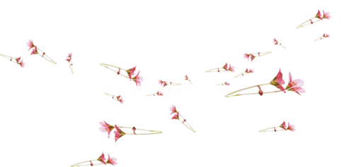 «Greedy-Pink» 0_8fd10_2a61da66_L