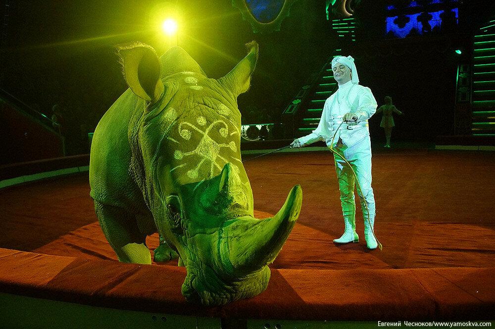 Осень. Цирк Никулина. Носорог. 22.10.15.03..jpg
