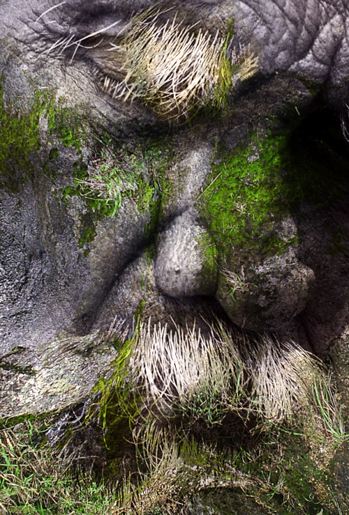 Фотоманипуляции by Jan Oliehoek