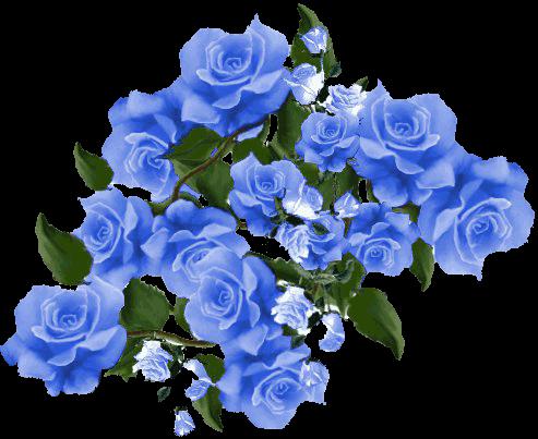 Синие цветы пнг