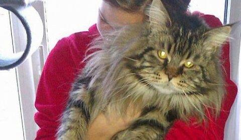 Австрийские воры вернули обжору-кота хозяевам