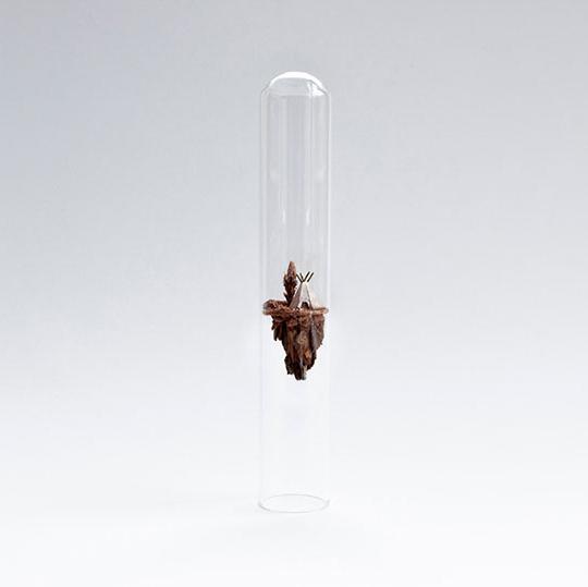 Test tube dioramas, Rosa de Jong6_540.jpg