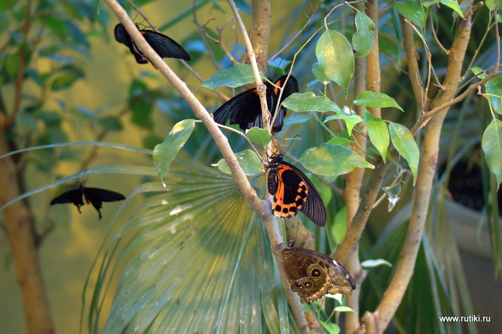 Бабочки на ВВЦ