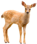 CR_ASTIC Deer.png