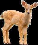 CR_ASTIC Deer.png