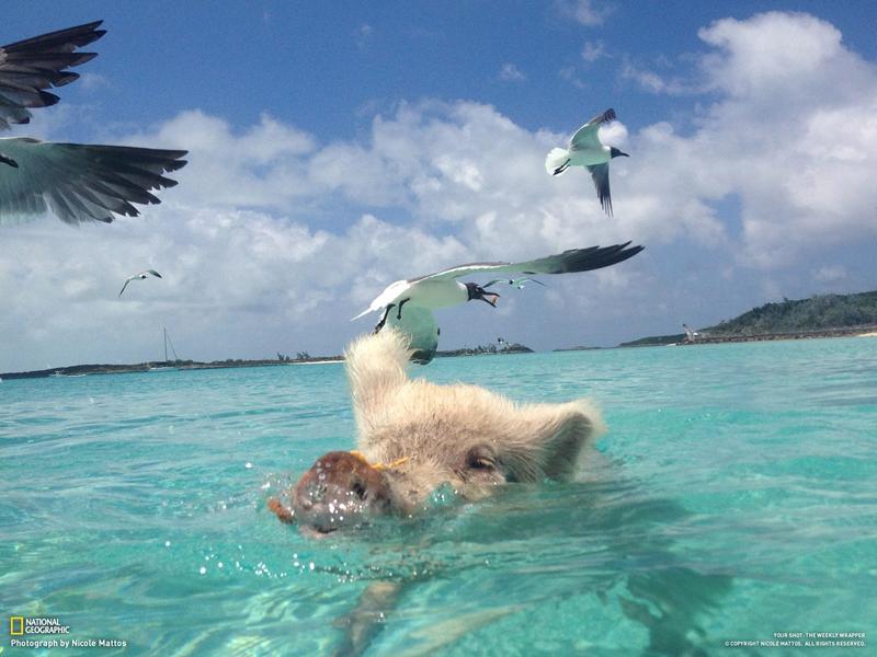 Смешные фото тюленей