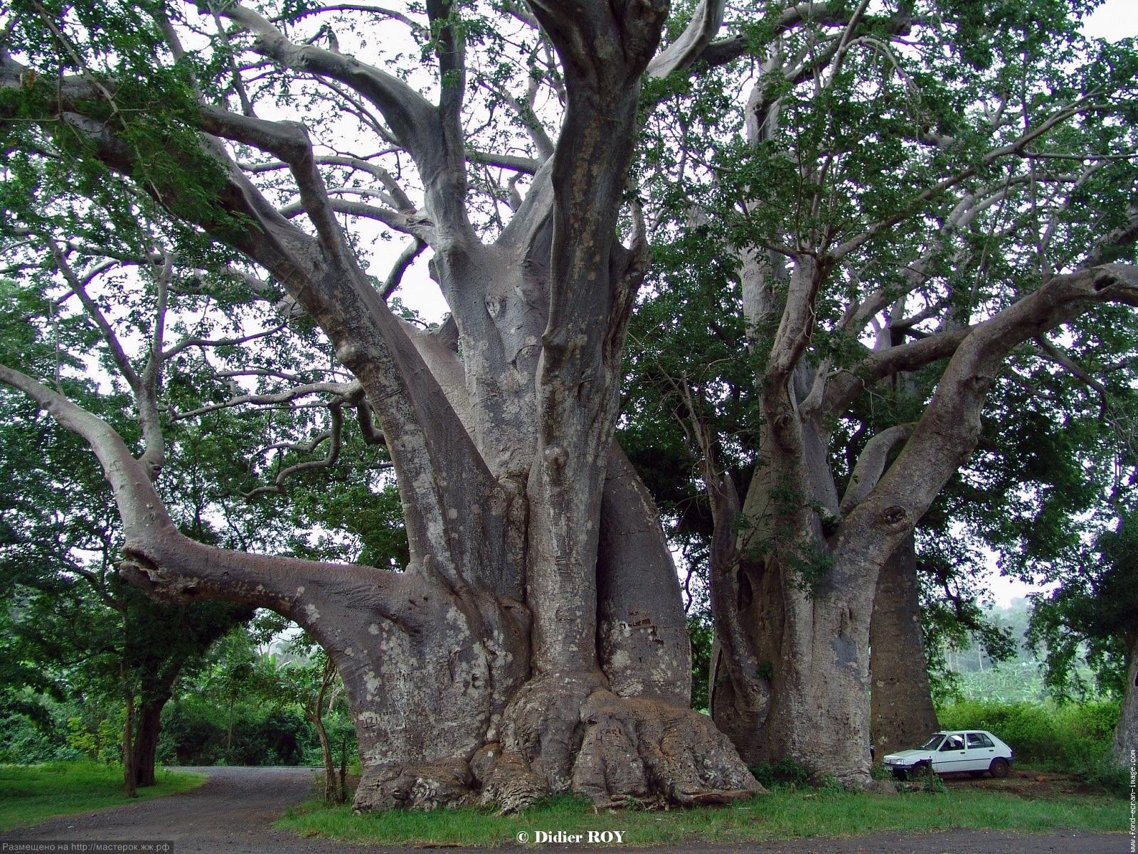 mayotte musical plage baobab