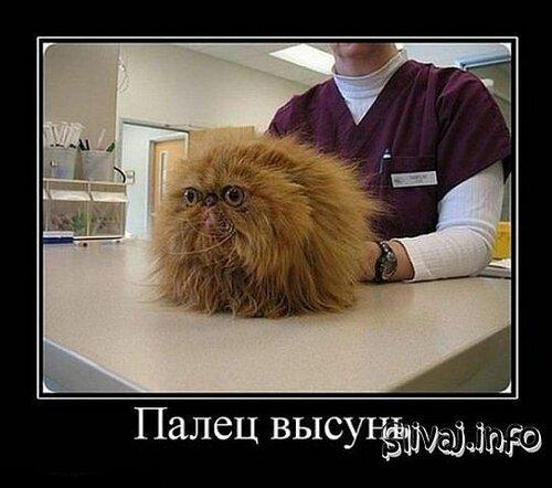 Прикольные картинки: кот у проктолога