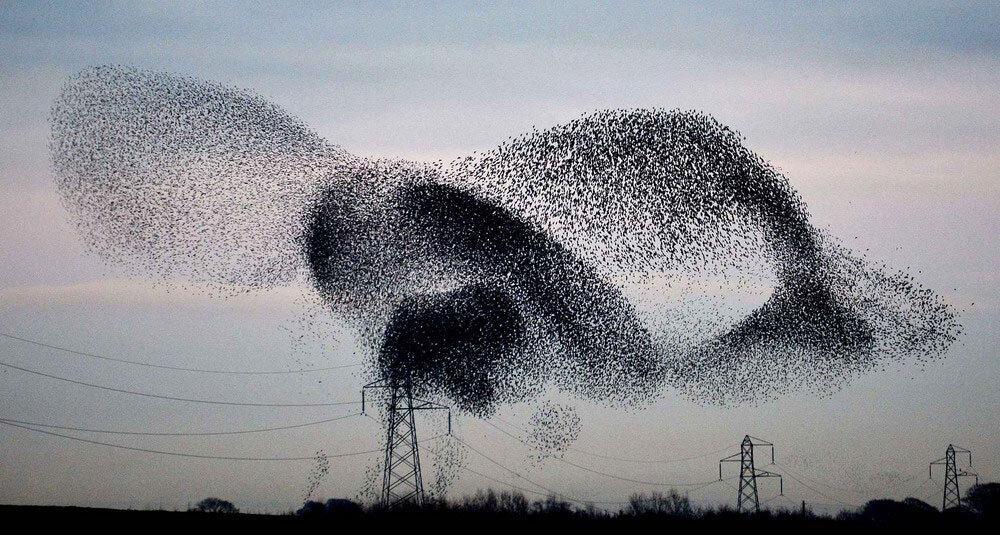 murmuration-of-starlings-1c3f-diaporama_resize.jpg