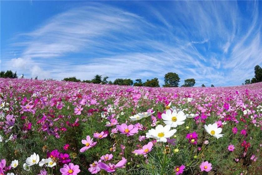 Живописный японский парк Хитати Кайхин 0 1422db da49f14b orig