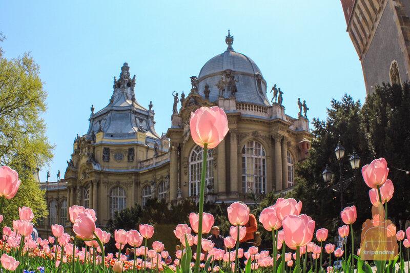 Встречай весну в Венгрии !!!