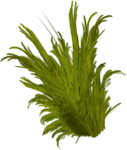 priss_Birthday_bush.png