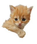 «Рыжий котенок» 0_8c6aa_398afd12_S