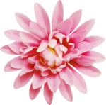 Lilas_Greedy-Pink_elmt (84).PNG