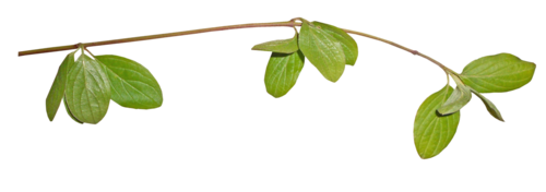«Florjuscrap_Green_Madness»  0_8ff70_ead5e381_L