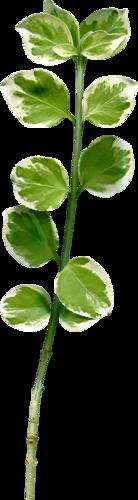 «Florjuscrap_Green_Madness»  0_8ff77_8c7171ab_L