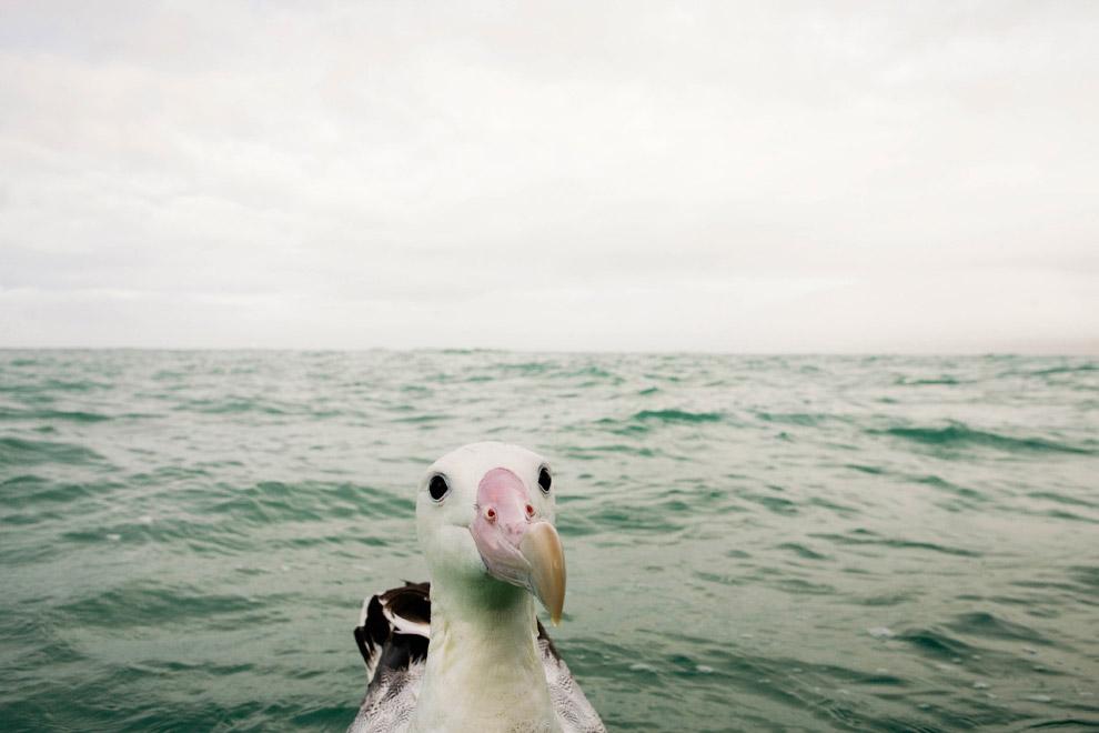 3. «Если кто спросит — вы меня не видели». (Фото William Richardson | Comedy Wildlife Photography Aw