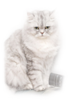 JC_ABrik-Prettykittycat.png
