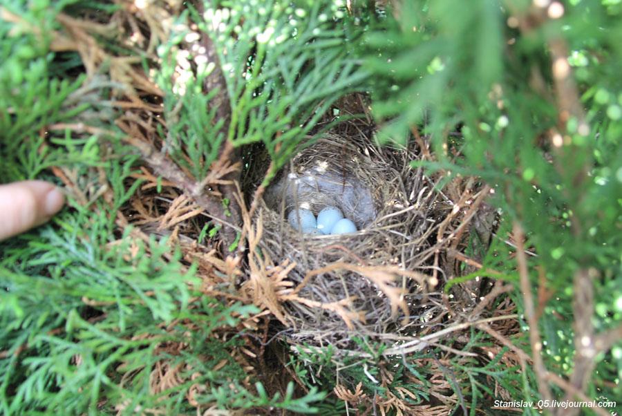 Гнездо-2