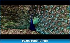 Большой год / The Big Year [EXTENDED] + [THEATRICAL] (2011) BD Remux + BDRip 1080p / 720p + DVD9 + DVD5 + HDRip