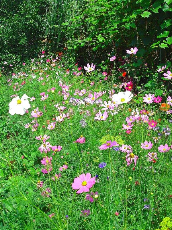Лето,цветы райского садика в с.Остров